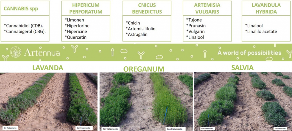 Medicinal and Aromatic Plants.